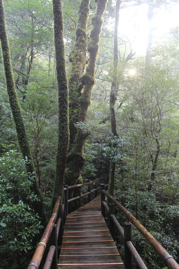 朝日と苔の森