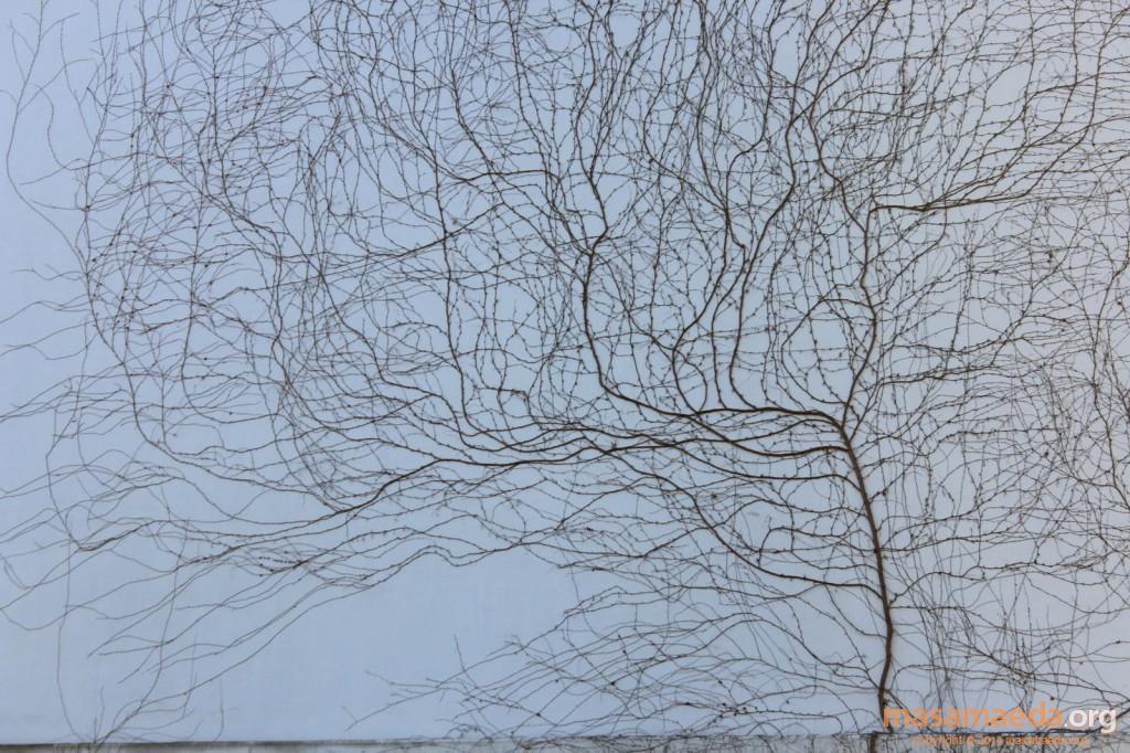 ツタの蔓の芸術