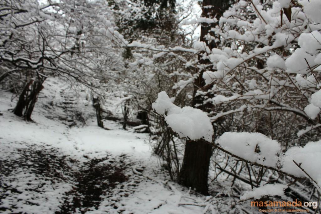 ふかふかの新雪です