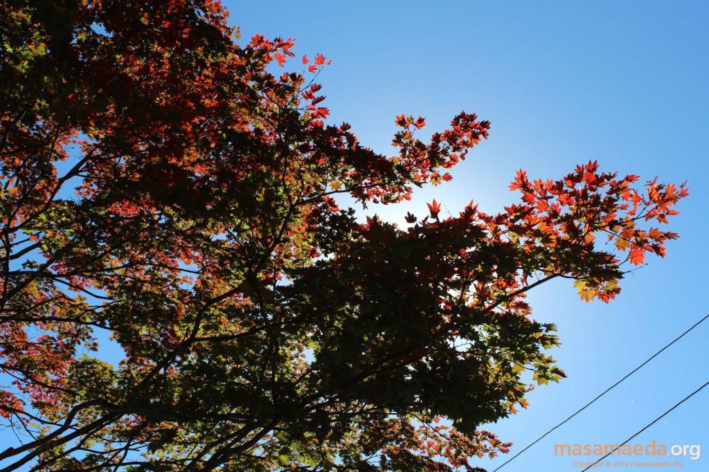 陽射しと紅葉
