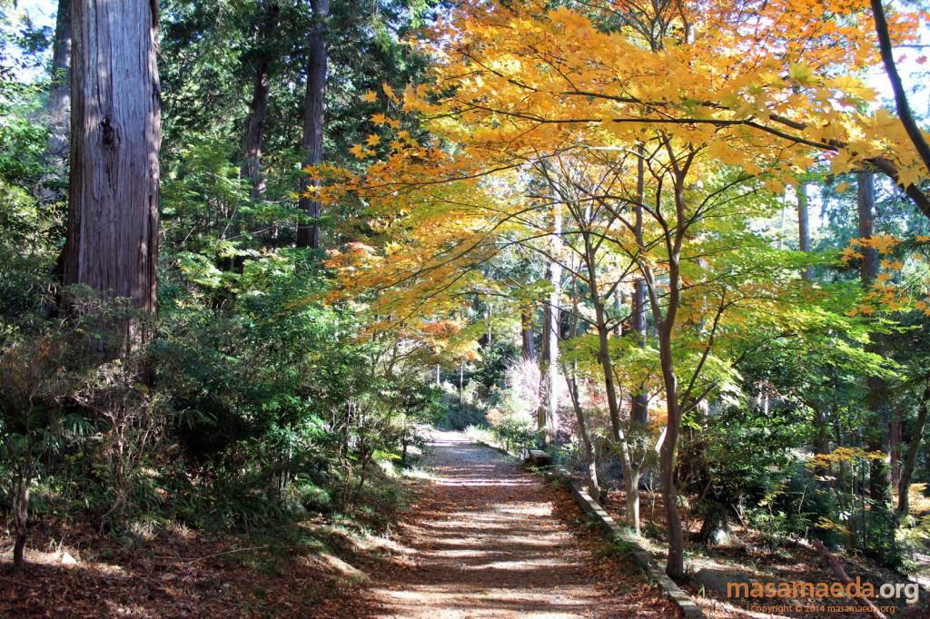 紅葉している道は登山道ではありません
